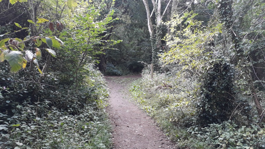 Once into the ancient Birkham Woods, we bear right at the fork, up the main track.